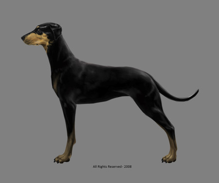 Dobermann Pinscher Profile